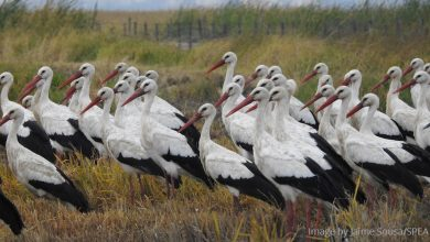Photo of Portugal's proposed new airport would threaten hundreds of protected birds