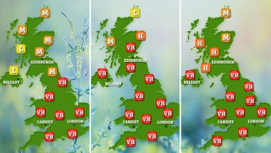 Photo of Worst week for hay fever victims in YEARS – as freak warmth wave triggers pollen explosion