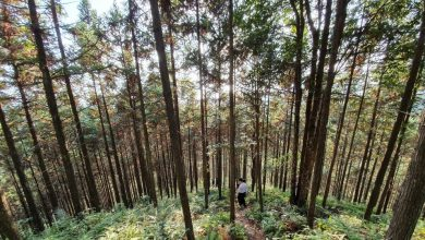 Photo of China introduces new regulation to safeguard forests and enhance governance