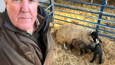 Photo of Jeremy Clarkson reveals he was attacked by 250,000 bees at his 1,000-acre farm