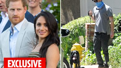 Photo of Prince Harry and Meghan Markle mocked as their canine Pula's identify is Romanian slang for 'penis'