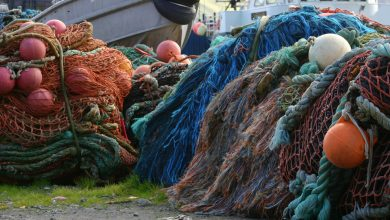 Photo of EU overfishing deadline: missed. What now?