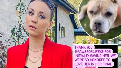 Photo of Kaley Cuoco reveals her canine Petunia died as actress says she was 'honored to like her'